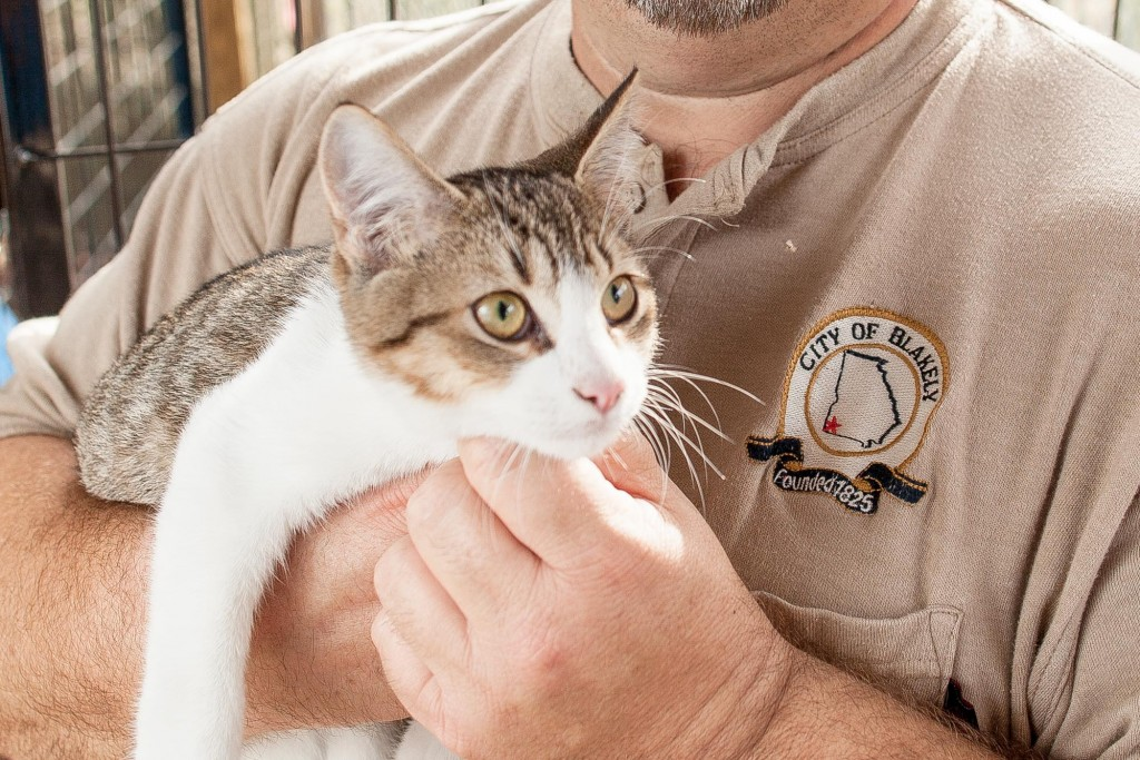 blakely-georgia-animal-shelter-cat